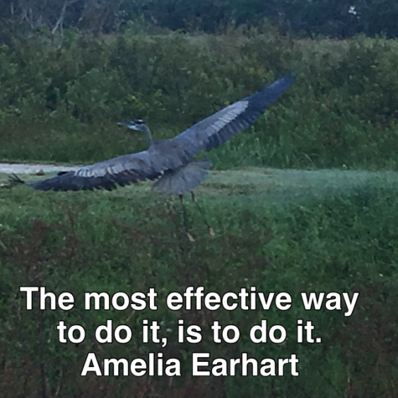 amelia earhart blue heron