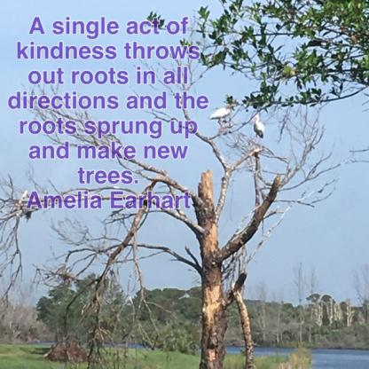 amelia earhart tree