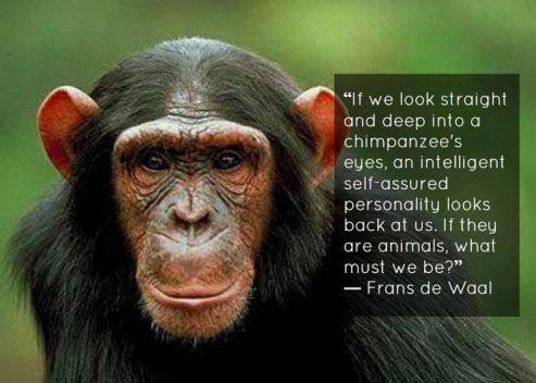 3e14e59f9e5a62705edaf5a50779fab2--primates-animal-rights
