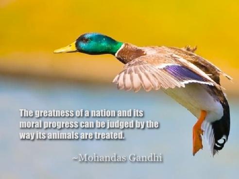 animal-timing-animal-rights-20-728