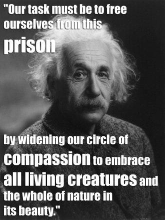 QUOTE-Einstein